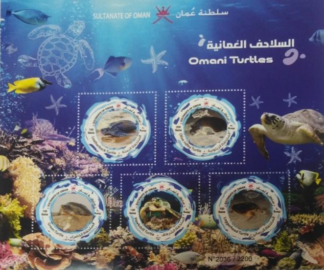 Oman Turtles